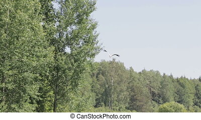 White stork flying against the blue sky