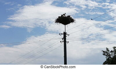 White stork sits in a nest on a pole on a summer day - A...