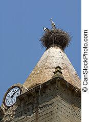 White storks in Huesca, Spain