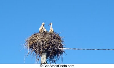white storks in the nest on a pole against a blue sky