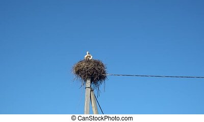 white storks in the nest on a pole against a blue sky.