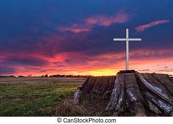 White Stump Cross