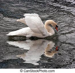 white swan at a lake