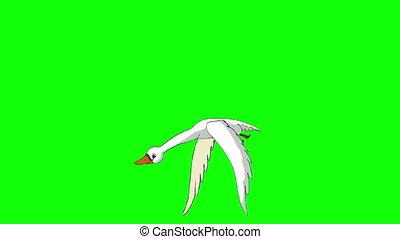White Swan Flies Chroma Key - White Swan Flies. Animated...
