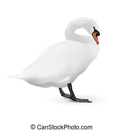 White swan isolated on white