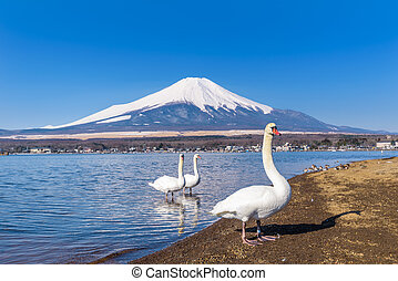 White Swan of Lake Yamanaka with Mt. Fuji at Yamanashi, Japan