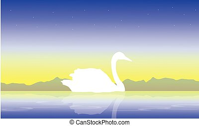 White swan on lake scenery silhouettes
