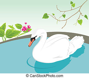 White swan swimming in a pond. Vector illustration
