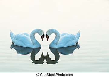 White swans facing each other