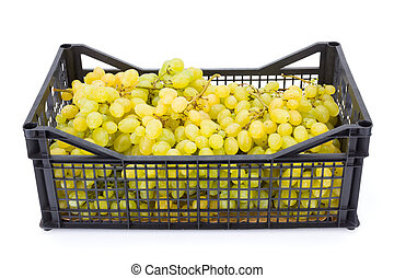 White table grapes (Vitis) in plastic crate