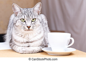 White tea mug cat