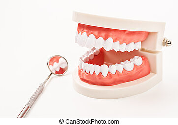 White teeth model and dental instruments.
