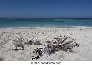 white tengerpart, homok