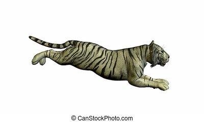 White Tiger Running - White tiger running on a white...