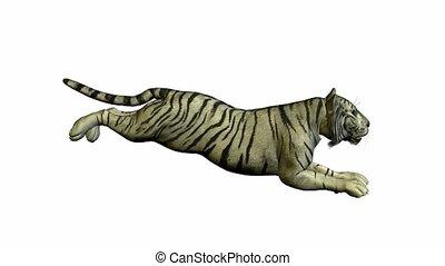 White Tiger Running - White tiger running on a white ...