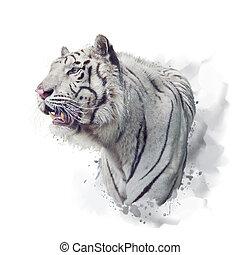 White tiger watercolor illustration on white