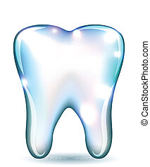 White tooth isolated on a white background