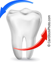 White tooth surrounded by beams. Taking care of teeth concept. Vector.