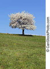 white tree and green grass in spring