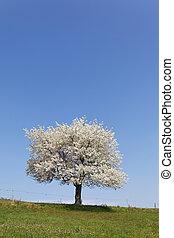 white tree and sky