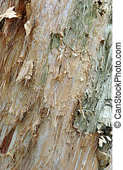 white tree bark texture