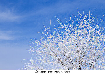 White tree in snow over blue cloudy sky