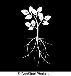 White Tree nd Roots. Vector Illustration.