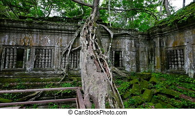 White tree trunk and temple walls - A medium shot of tree...
