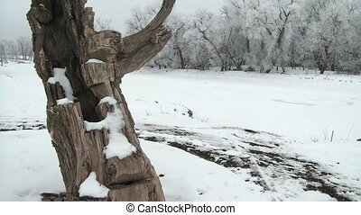 White Trees By the Snowy River