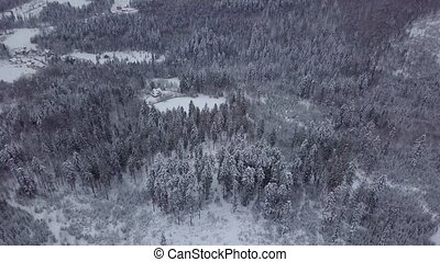 White trees in snowy landscape - Picturesque view from...