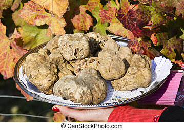 White truffles from Piedmont on tray held by the hands of a woman