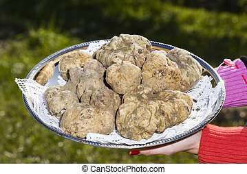 White truffles from Piedmont on tray