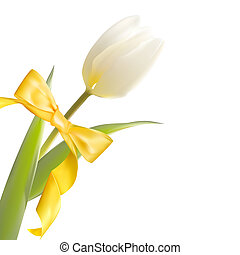 White tulip and yellow bow on holiday
