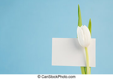 White tulip with a blank card on a blue background