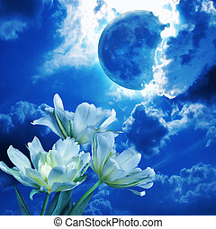White tulips in the blue light of the full moon