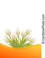 White tulips on a card for birthday. illustration.