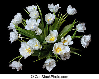 White tulips on black