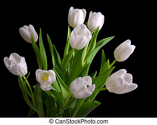 white tulips on black background