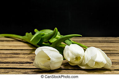 White tulips on black background
