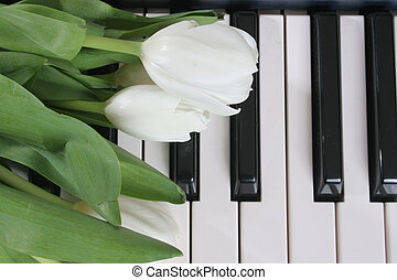 White Tulips on Keys -  - White tulips lay on piano keys
