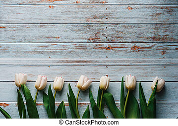 White tulips on wooden blue background. Flat lay, top view composition with copy space