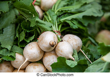 White turnip - Fresh white turnip