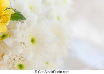 white virág, helyett, lágy, háttér