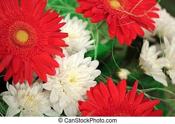 white virág, zöld piros
