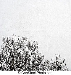 white wall and the tree