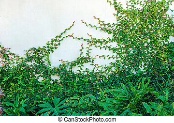 White wall overgrown with ivy and plants on a white wall