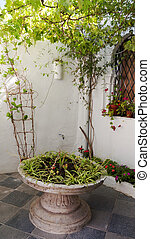 White wall   with plants