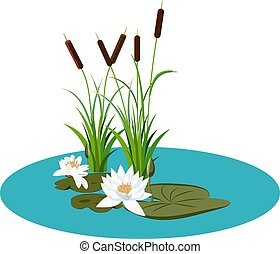 White water lily and bunch of reeds in water vector illustration