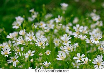 White wild forest flowers