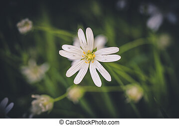 White wildflower in a green forest in the spring